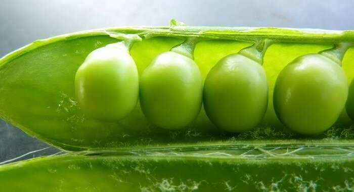 Бобовые растения. растения семейства бобовых. плоды бобовых растений