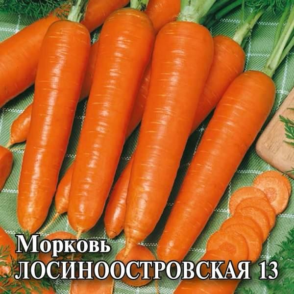 Лосиноостровская: описание сорта моркови, характеристика, выращивание