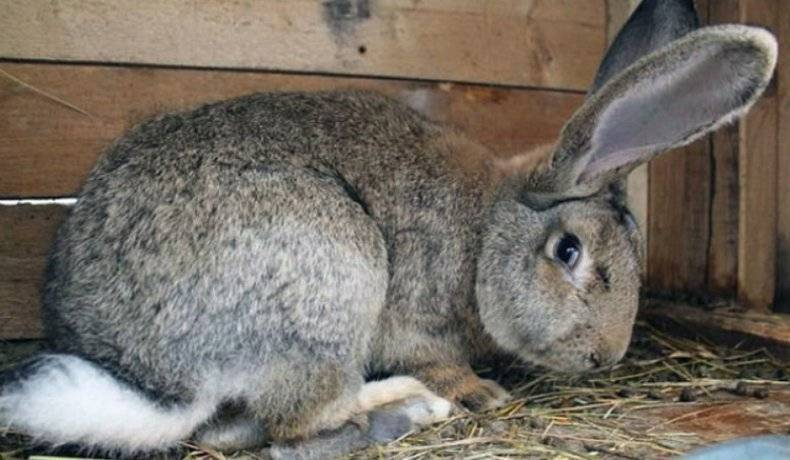 Почему кролик не ест и не пьёт: причины, что делать