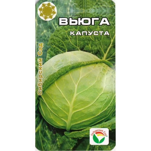Неприхотливая капуста вьюга: описание и характеристика сорта, фото овоща