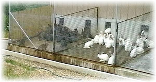 Загон для кроликов на даче своими руками - общая информация - 2020