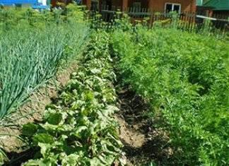 Какие овощи нельзя выращивать на одной грядке? » женский мир