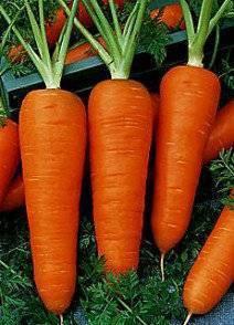 57 популярных сортов моркови