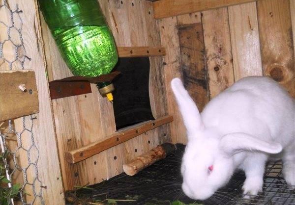 Поилка для кроликов: виды, описание. поилки для кроликов своими руками