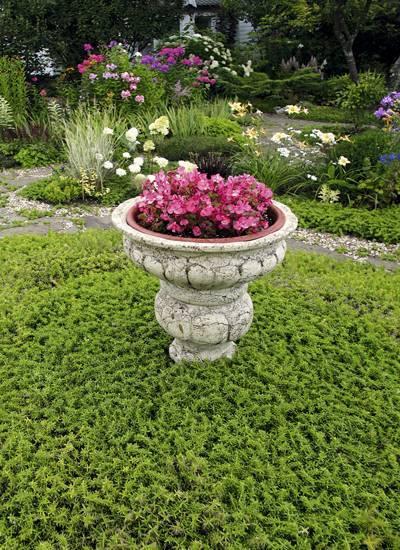 Великолепные цветущие почвопокровные многолетники в ландшафтном дизайне