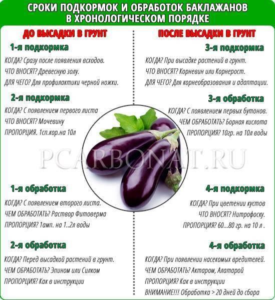 Чем подкормить баклажаны после высадки в теплицу – 7 этапов для наилучшего результата