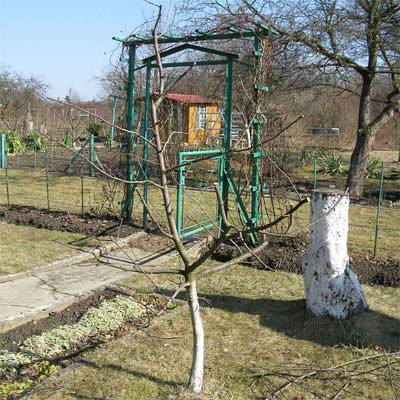 Весенние работы в саду и огороде - порядок действий подробно!