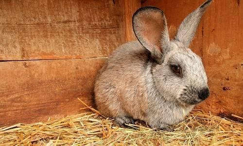 Как разделать кролика?