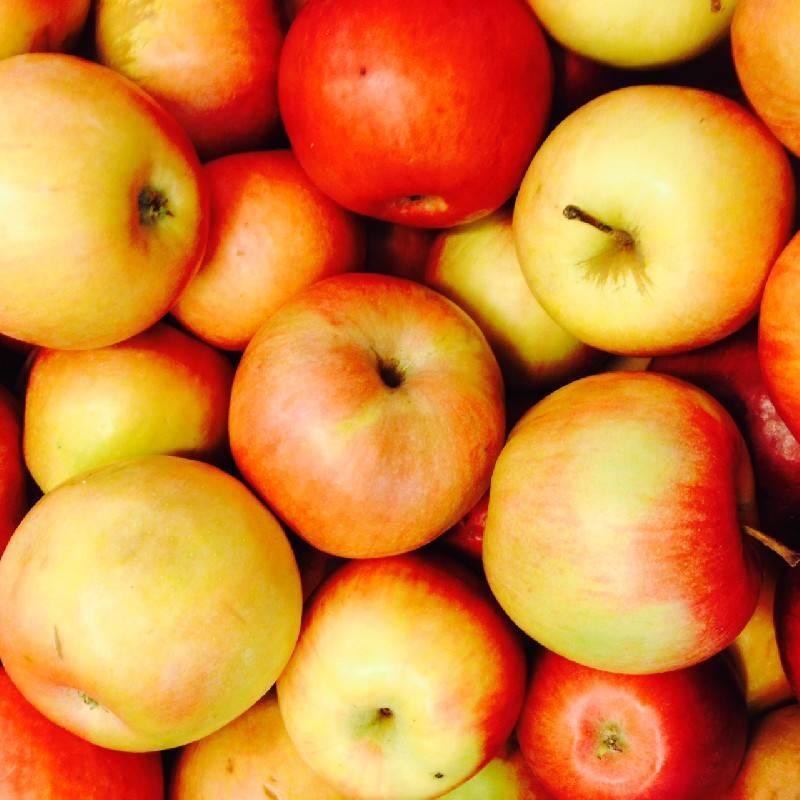 О яблоне айдаред: описание сорта, характеристики, агротехника, выращивание