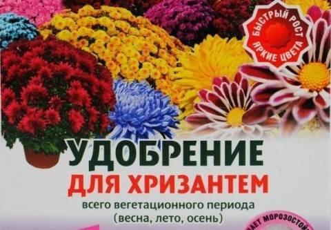 Чем весной подкормить цветы – уход за цветами