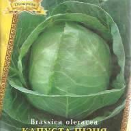 Описание сорта капусты амагер