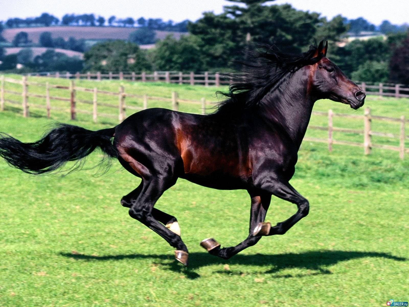 Вороной конь: особенности масти