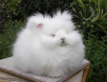 Как обеспечить достойное существование ангорскому кролику или представителю другой породы