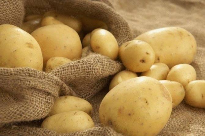 Что сажать после картошки на грядках на следующий год