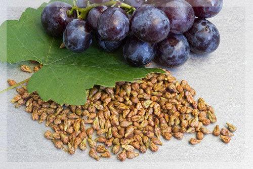 Виноград из косточки: как вырастить в домашних условиях