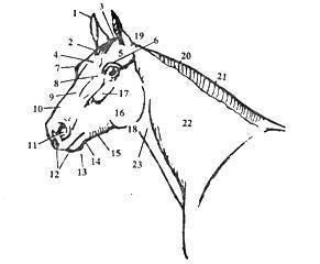 Все статях лошадей: общие представления, критерии, требования к телу лошади
