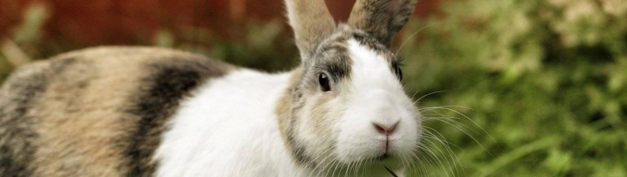 Понос у кролика как справится с этим недугом