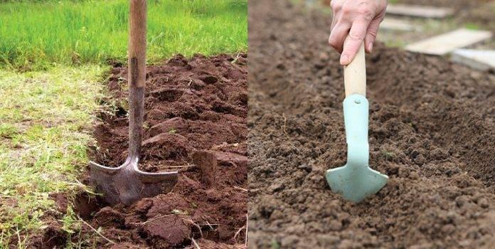 Морковь на урале: сроки посадки, лучшие ранние, поздние и среднепоздние сорта, особенности ухода и отличия климата, а также когда начинать сбор урожая?