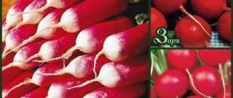 Обзор и описания лучших сортов картофеля для выращивания на урале: ранних, средних и поздних