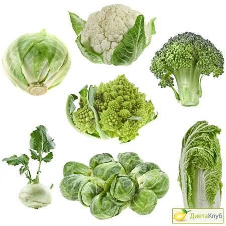 Основные виды капусты с фото и названиями