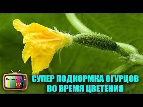 Борная кислота: применение в садоводстве
