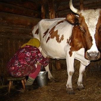 Яловая корова – 7 причин бесплодия крс и способы их решения