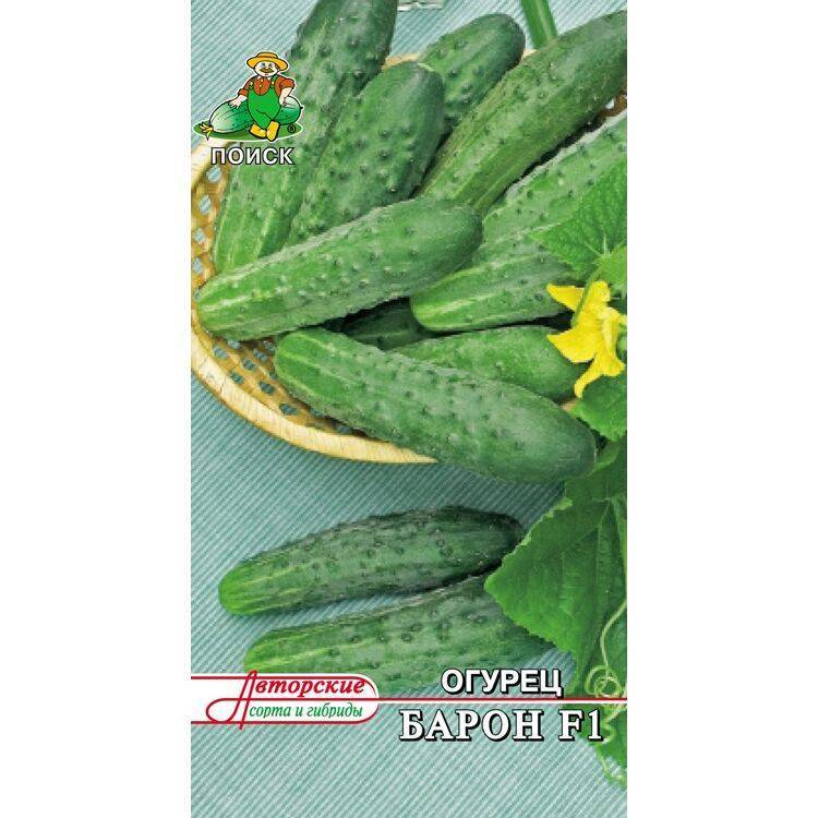Сорт огурцов гинга f1: описание, характеристика, выращивание и уход