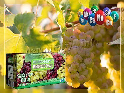 Подкормка винограда: варианты внесения удобрений