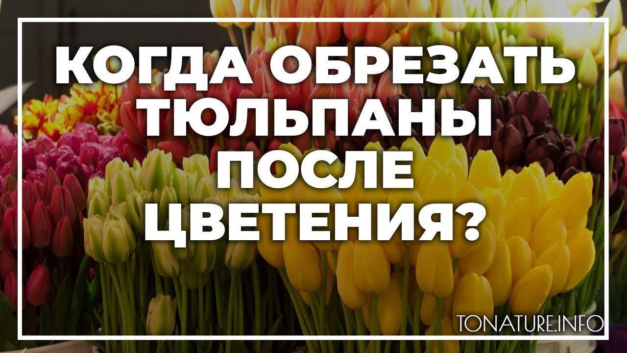 Как и когда выкапывать тюльпаны для пересадки на другое место