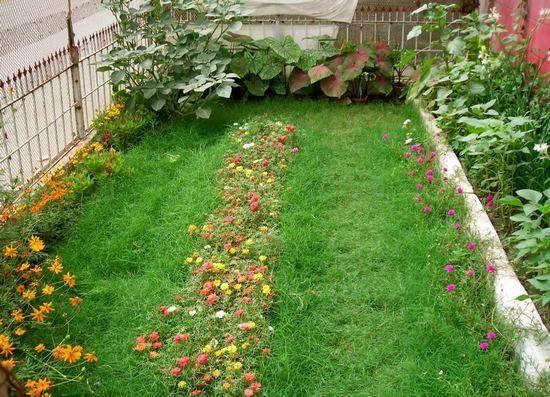 Выращивание портулака крупноцветкового из семян