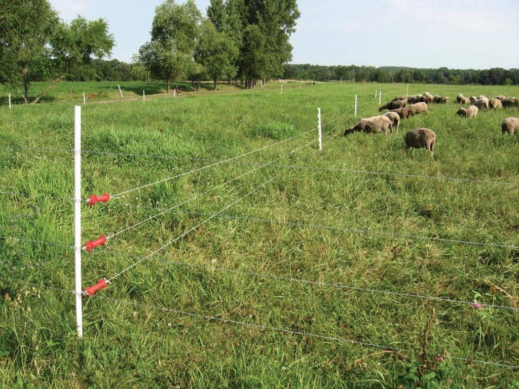 Как сделать электроизгородь для овец, свиней и крс своими руками