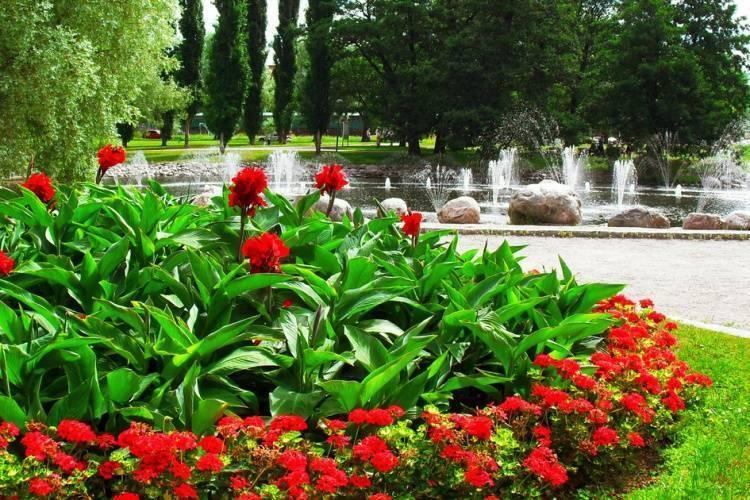 Пионы: посадка и уход. инструкция как вырастить из саженца, 110 фото красивых цветов