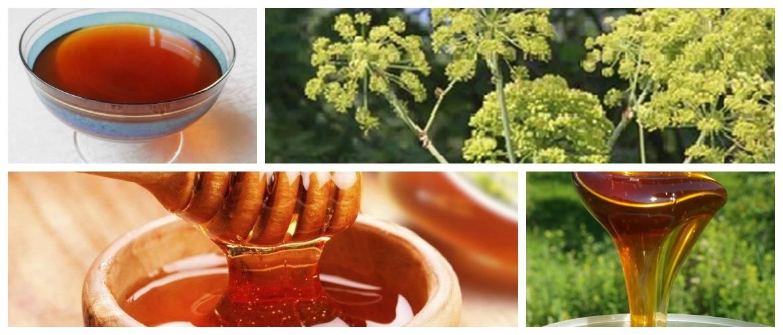 Дягилевый мед: полезные свойства и противопоказания, применение в народной медицине