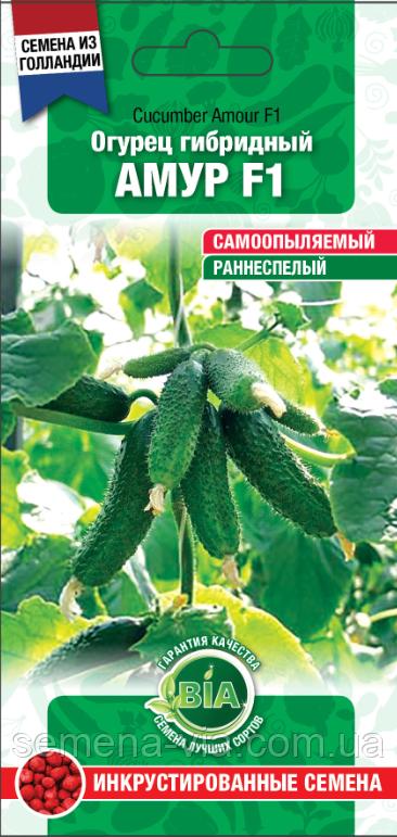 Сорт огурцов амур f1: описание и характеристика, отзывы