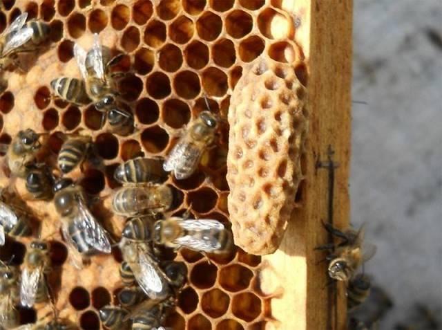 О брожении меда: почему может прокиснуть мед в банке и можно ли его употреблять