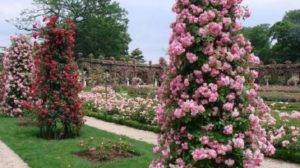 Для сада опоры розы. как сделать опоры для плетистых роз из арматуры своими руками (варианты). идеи опоры под клематисы