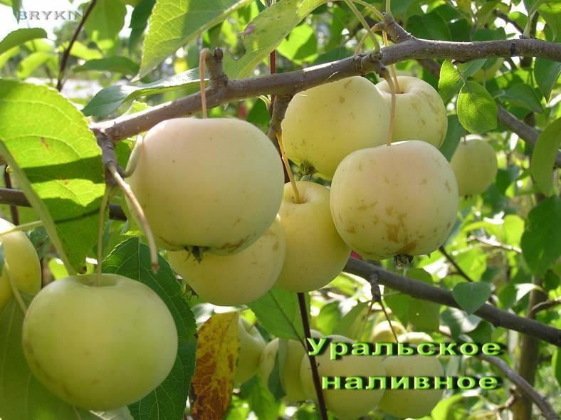 Плодовый сад и питомник