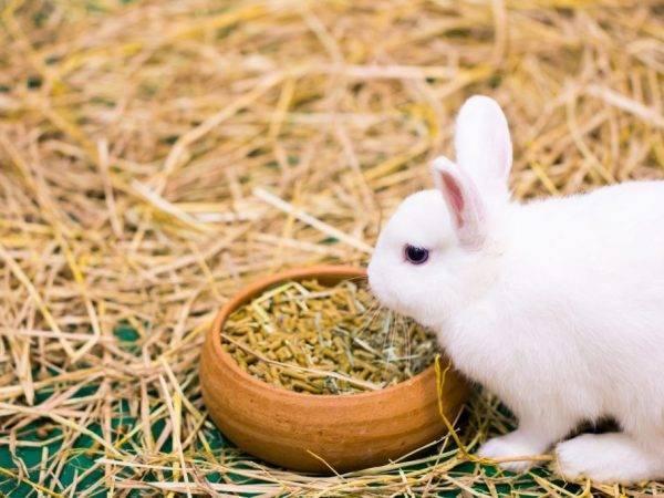 Рацион питания крольчихи после окрола