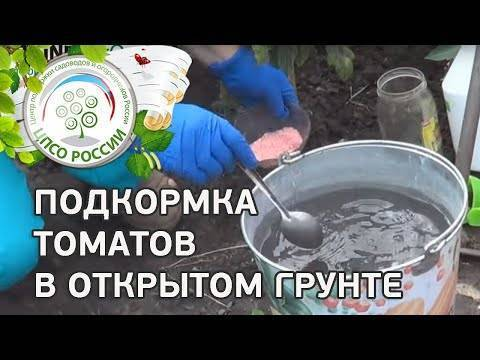 Как правильно подкормить высаженную рассаду томатов в грунт, чем удобрять, инструкция