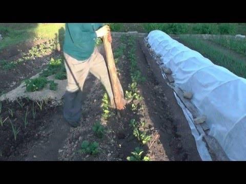 Внекорневая подкормка картофеля: чем производится, для чего нужна, полезные рекомендации