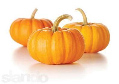 Семена тыквы – лучшие сорта для открытого грунта, инструкция по посадке
