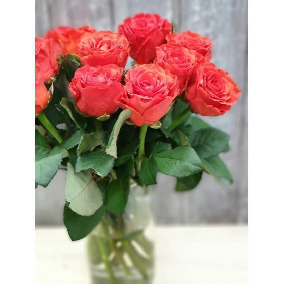 Роза эль торо (el toro) — что это за разновидность