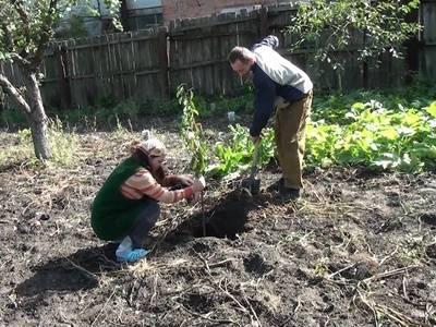 Как правильно посадить саженец яблони – руководство для новичков