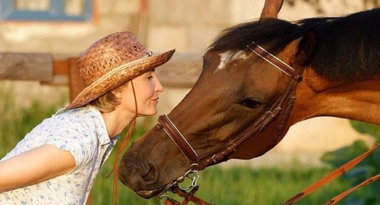 Сколько живут лошади - от чего зависит продолжительность жизни и как определить возраст