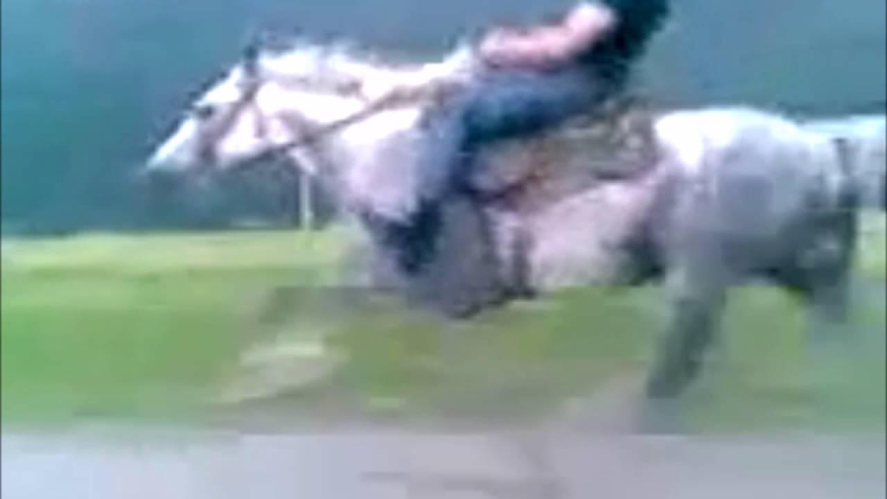 Какую лошадь можно назвать самой быстрой в мире