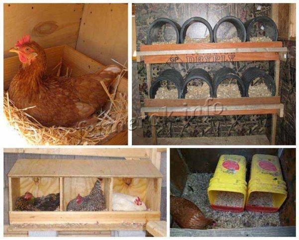 Гнезда с яйцесборником для кур-несушек: особенности и изготовление своими руками