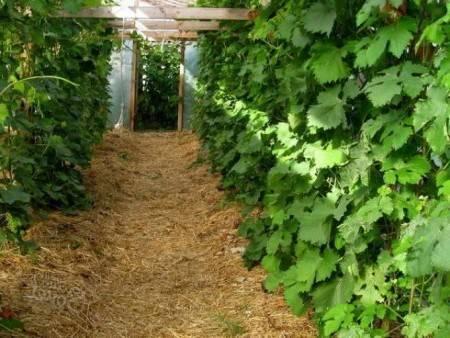Куда девать скошенную траву на дачном участке: как можно использовать