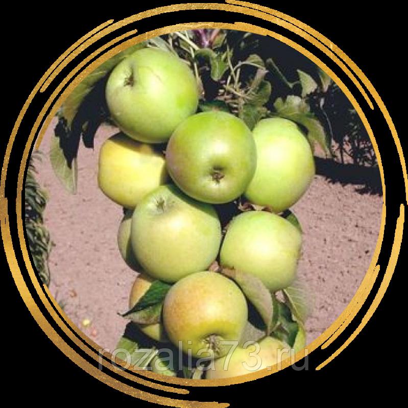 Уход за колоновидными яблонями – практическое руководство для новичков