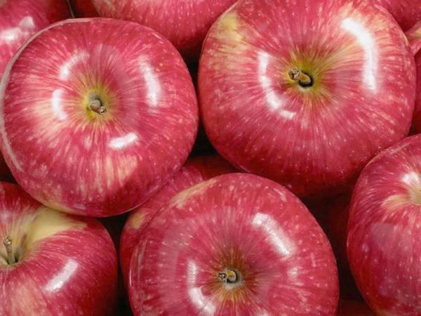 Описание яблони мантент — фото и отзывы