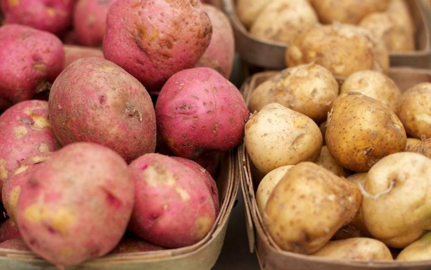 Популярные ранние сорта картофеля и особенности их выращивания